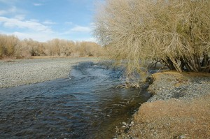 A nice patch of willow along the river edge by the town of Bajanhongor, Mongolia.