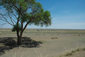 The last tree. From here on south - the Gobi Desert proper.