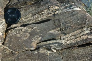 A typically highly-folded migmatite in the Gobi of Mongolia. There has been a segregation into light-colored fraction (leucosome) and dark-colored (melanosome).