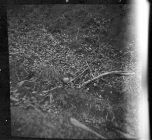 Spot the yellow-breasted robin! Shot with a box-Brownie camera in about 1970.