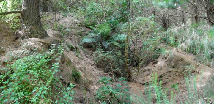The Pollock Road, New Zealand Triassic plant fossil locality now.