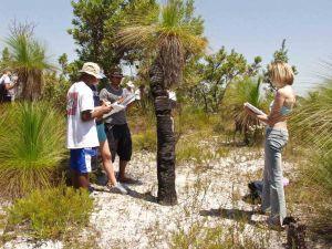 Students study an old grasstree on Stradbroke Island.